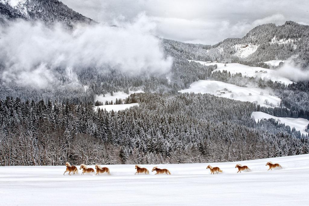 haflinger-1-7.jpg