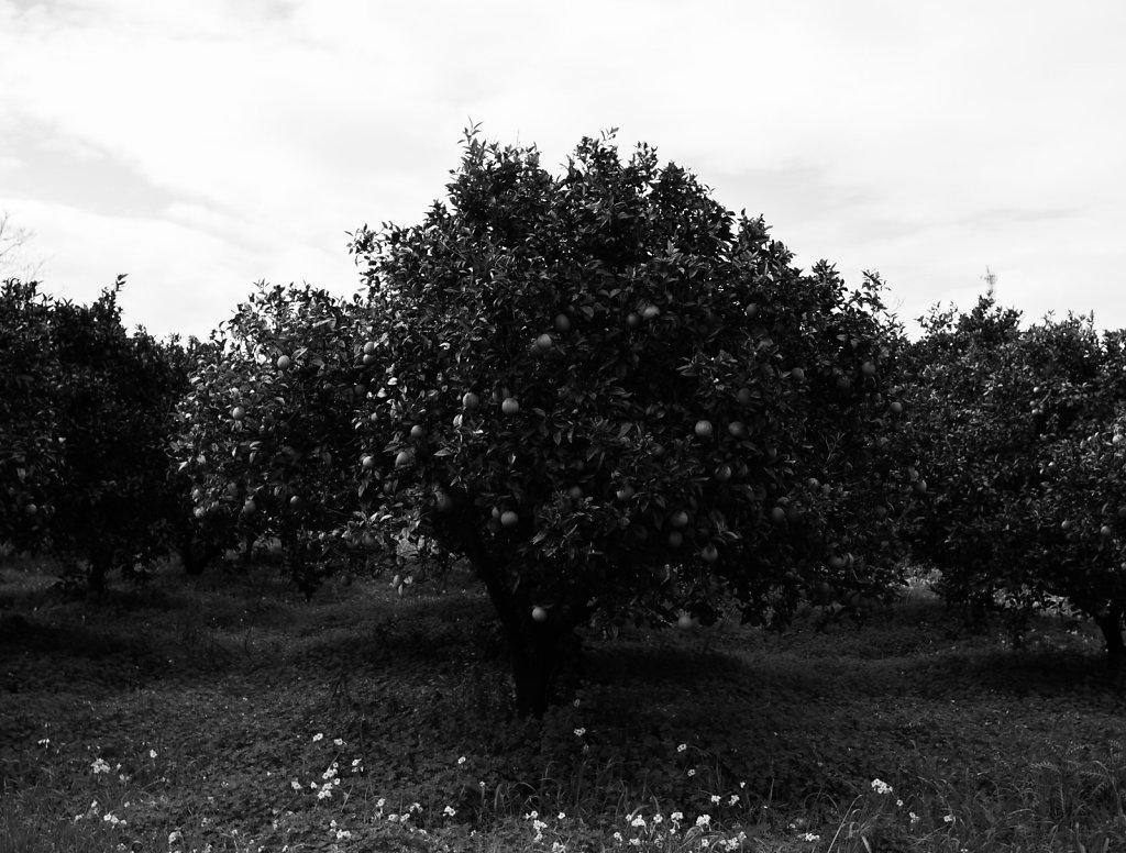 siciweb-46.jpg